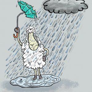 Aprilwetter, Elvis, Schaf, Regen, Sturm, nass, kalt, regenschirm